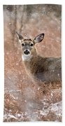 A White-tailed Deer In The Snow Beach Towel