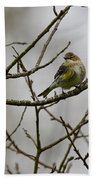 A Yellow-rumped Warbler In The Evening Beach Towel