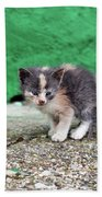 Abandoned Kitten On The Street Beach Towel