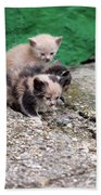 Abandoned Kittens On The Street Beach Towel