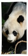 Absolutely Beautiful Giant Panda Bear With A Sweet Face Beach Towel