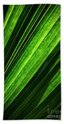 Abstract Of Green Leaf Of Exotic Palm Tree Beach Towel