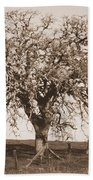 Acacia Tree In Sepia Beach Towel
