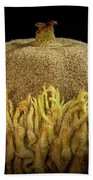 Acorn Emerging Beach Towel