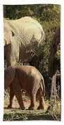 Addo Elephant Family Beach Towel
