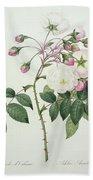 Adelia Aurelianensis Beach Towel by Pierre Joseph Redoute