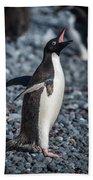 Adelie Penguin Squawking On Grey Shingle Beach Beach Towel
