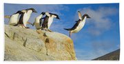 Adelie Penguins Jumping Beach Towel