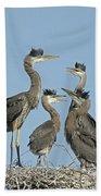 Adolescent Great Blue Herons Beach Towel
