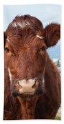 Adorable Brown Cow Standing On The Burren Beach Towel