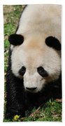 Adorable Face Of A Black And White Giant Panda Bear Beach Towel