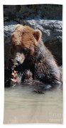 Adorable Grizzly Bear Playing With A Maple Leaf While Sitting In Beach Towel