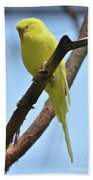 Adorable Little Yellow Parakeet In A Tree Beach Towel