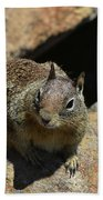 Adorable Up Close Look Into The Face Of A Squirrel Beach Towel