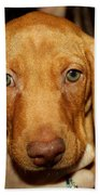 Adorable Vizsla Puppy Beach Towel