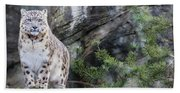 Adult Snow Leopard Standing On Rocky Ledge Beach Towel