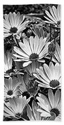African Daisies In Black And White Beach Towel