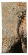 African Elephant Beach Sheet