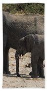 African Elephants Mother And Baby Beach Towel
