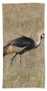 African Grey Crown Crane Beach Towel