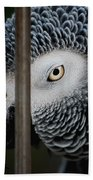 African Grey Beach Towel