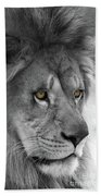 African Lion #8 Black And White  T O C Beach Towel
