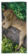 African Lion Panthera Leo On Tree, Lake Beach Towel