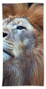 African Lion Beach Towel