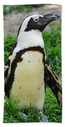 African Penguin Beach Towel