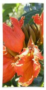 African Tulips Beach Towel
