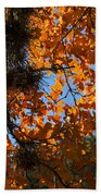 Afternoon Light On Maple Leaves Beach Towel