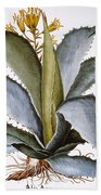Agave, 1613 Beach Towel