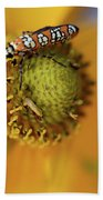 Ailanthus Webworm Moth #5 Beach Towel