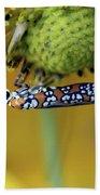 Ailanthus Webworm Moth #6 Beach Towel