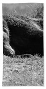 Alaska Grizzly - Do Not Disturb Grayscale Beach Towel
