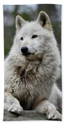 Alawa The Wolf Rests Beach Towel