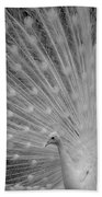 Albino Peacock In Black And White Beach Towel