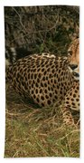 Alert Cheetah Beach Towel