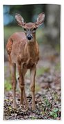 Alert Fawn Deer In Shiloh National Military Park Tennessee Beach Towel