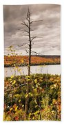 Algonquin Autumn Beach Towel