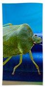 Alice The Stink Bug 3 Beach Towel