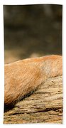 All Stretched Out Beach Towel