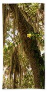 Allamanda And Oak Tree Beach Towel