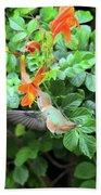 Allen's Hummingbird In Cape Honeysuckle Beach Towel