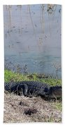 Alligator And Heron Beach Towel