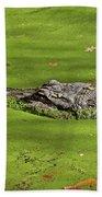 Alligator In Sun Beach Towel