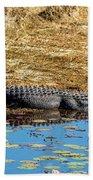 Alligator In The Sun Beach Towel