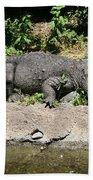 Alligator Surprise Beach Towel
