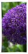 Allium Gladiator Closeup Beach Towel