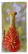 Aloe Vera Bloom Beach Towel